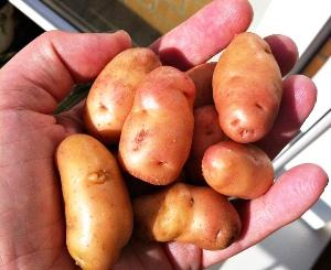 рыба с картошкой запеченные в духовке