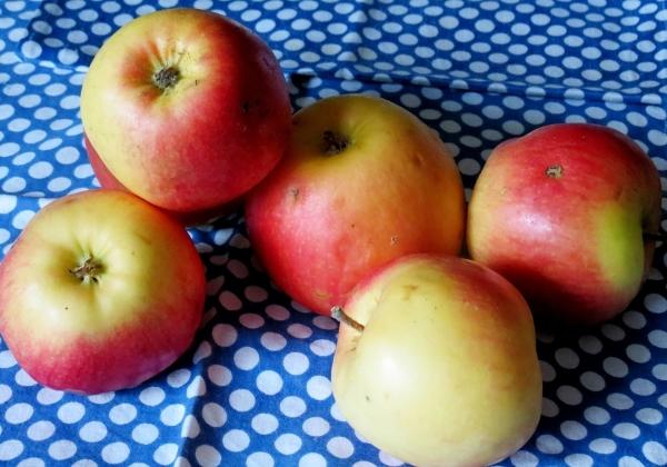 Чистим и нарезаем яблоки для пирога цветаевой