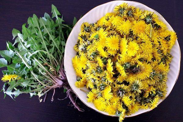 Салат из одуванчиков рецепт польза и вред