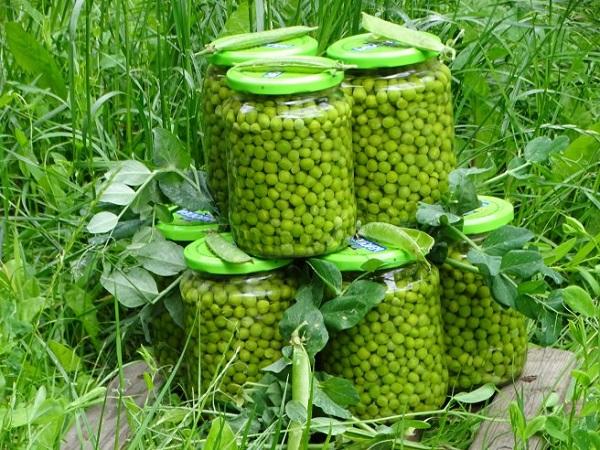 Рецепт зеленого горошка в домашних условиях