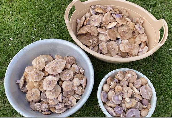 Рецепт грибы маринованные на зиму с уксусом